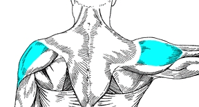 Dumbbell Side Lateral Raise